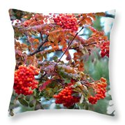 Painted Mountain Ash Berries Throw Pillow