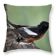 Painted Redstart Myioborus Pictus Throw Pillow