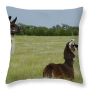 Pair Of Alpacas Throw Pillow