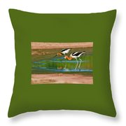 Pair Of American Avocets Throw Pillow