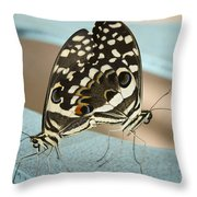 Pair Of Citrus Swallowtail Butterflies  Throw Pillow