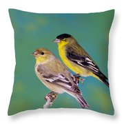 Pair Of Lesser Goldfinches Throw Pillow
