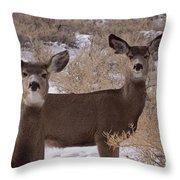 Pair Of Mule Deer   #7584 Throw Pillow