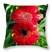 Pair Of Red Gerber Daisy Flowers With Ladybug Throw Pillow