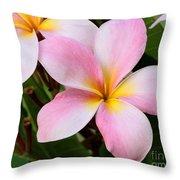 Palacious Pink Plumeria Throw Pillow
