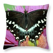 Palamedes Swallowtail Papilio Palamedes Throw Pillow