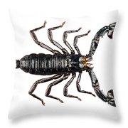 Palamnaeus Fulvipes Throw Pillow