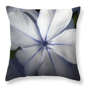 Pale Blue Plumbago Flower Close Up  Throw Pillow