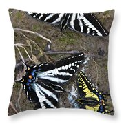 Pale Swallowtails And Western Tiger Swallowtail Butterflies Throw Pillow