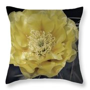 Pale Yellow Prickly Pear Bloom  Throw Pillow