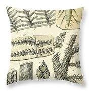 Paleozoic Flora, Calamites, Illustration Throw Pillow