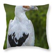 Palm-nut Vulture 2 Throw Pillow