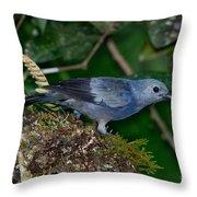 Palm Tanager Throw Pillow