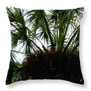 Palm Tree In Curacao Throw Pillow