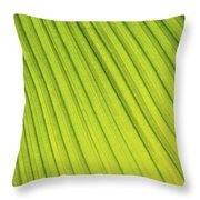 Palm Tree Leaf Abstract Throw Pillow
