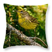 Palm Warbler Pictures 38 Throw Pillow