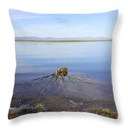Palm Water Throw Pillow
