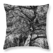 Palo Verde In Black And White Throw Pillow