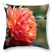 Pamela Howden Dahlia In Color Throw Pillow