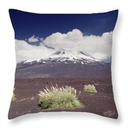 Pampas Grass And Old Lava Flow Llaima Throw Pillow
