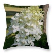 Panicled Hydrangea Throw Pillow