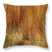 Panorama Winter Trees Color Throw Pillow