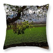 Panoramic Of Winter Lettuce Throw Pillow