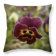 Pansy Beauty Photograph Throw Pillow