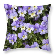Pansy Flowers In Spring Background Throw Pillow