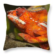 panther chameleon from Madagascar 3 Throw Pillow