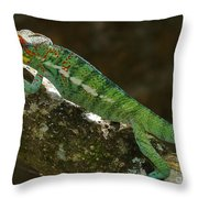 panther chameleon from Madagascar 5 Throw Pillow
