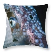 Paper Nautilus Port Phillip Bay Throw Pillow