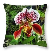 Paph Fiordland Sunset Orchid Throw Pillow