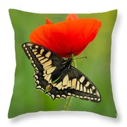 Papilio Machaon Butterfly Sitting On A Red Poppy Throw Pillow