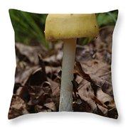 Parasol Mushroom Macrolepiota Sp Throw Pillow