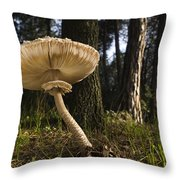 Parasol Mushrooms Pair In Forest Spain Throw Pillow
