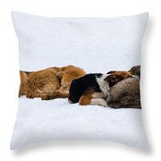 Pariah Dogs On The Snow - Featured 2 Throw Pillow