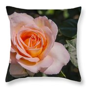 Parnell Pink Rose Throw Pillow