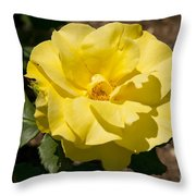 Parnell Yellow Rose Throw Pillow