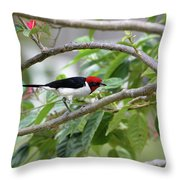 Paroare Rougecap Paroaria Gularis Throw Pillow