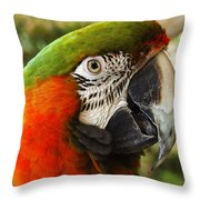 Parrot 26 Throw Pillow