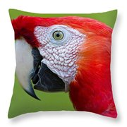 Parrot 35 Throw Pillow