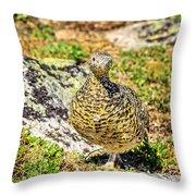 Partridge 1 Throw Pillow