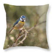 Parus Sitting On A Thin Branch Throw Pillow