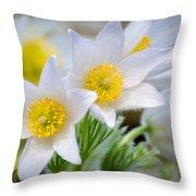 Pasque Flower Throw Pillow