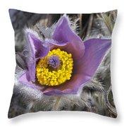 Pasque Flower Pulsatilla Halleri Throw Pillow
