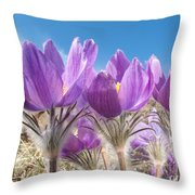 Pasque Flowers Close-up In Natural Environment Throw Pillow