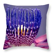 Passiflora Alata - Ruby Star - Ouvaca - Fragrant Granadilla -  Winged-stem Passion Flower Throw Pillow
