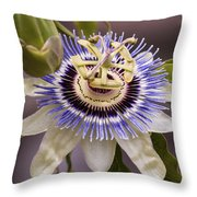 Passiflora Caerulea Throw Pillow