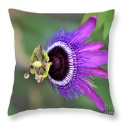 Passiflora Lavender Lady Throw Pillow